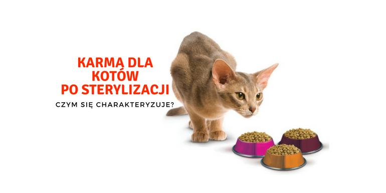 Karma dla kotów po sterylizacji/kastracji – czym się charakteryzuje?