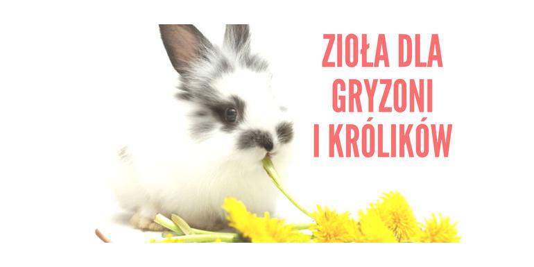 Zioła dla gryzoni i królików
