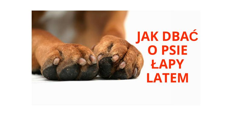 Czy wiesz jak dbać o łapy psa latem?