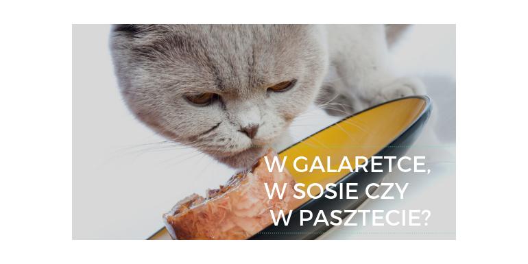 W galaretce, w sosie czy w pasztecie? Rodzaje karm mokrych dla kota