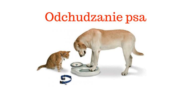 Odchudzanie psa