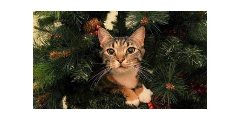Jak zabezpieczyć choinkę przed kotem i jak zabezpieczyć kota przed choinką?