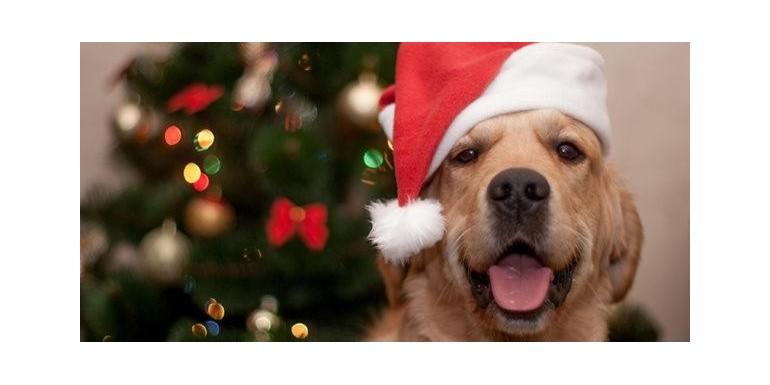 Święta z psem. 7 PROSTYCH ZASAD aby były radosne także dla naszego psa
