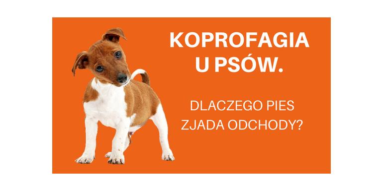 Koprofagia u psów. Dlaczego pies zjada odchody?