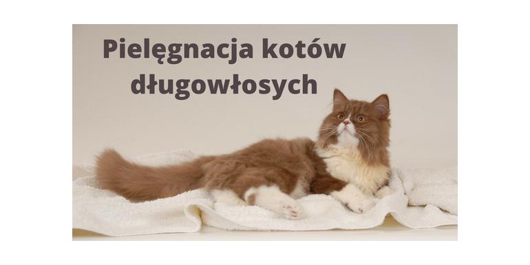 Pielęgnacja kotów długowłosych
