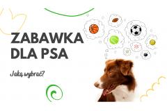 Zabawka edukacyjna dla psa. Jaką wybrać?