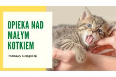 Opieka nad małym kotkiem.